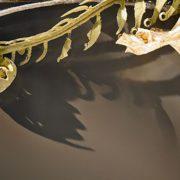 Corian Deep Sable (фото)